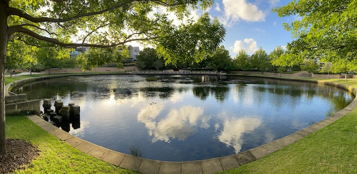 Yard pond clean free of algae