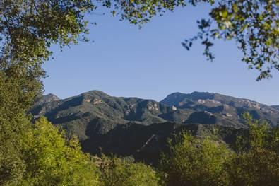 Green hills where Geisha Coffee grows